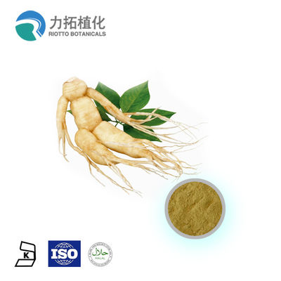 China Pharmaceutical Grade Natural Plant Extracts / Ginseng Extract Powder Ginsenoside supplier