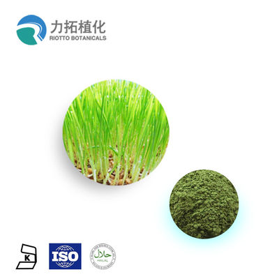 China 100% Natural Wheat Grass Powder / Organic Plant Protein Powder Keep Health supplier
