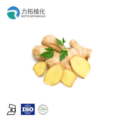 China Organic Ginger Root Extract / Pure Plant Extract For Nausea Green Healthy supplier