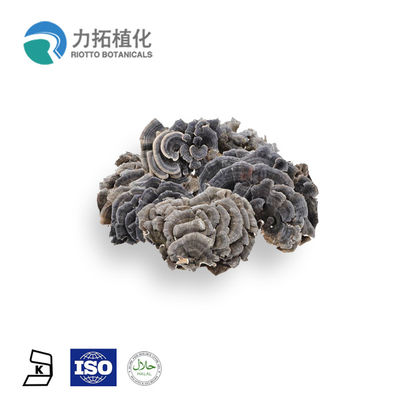 China 50% Mushroom Polysaccharides Coriolus Versicolor Extract Use As  Medicine supplier