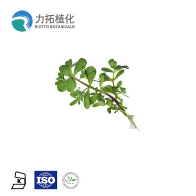 China 5% - 20% Aescin Plant Extract Powder Horse Chestnut  For Relieving Pain supplier