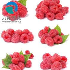 China Pink Color Plant Extract Powder Raspberry Extract Powder Ketone 98% 99% GMP Standard supplier