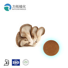 China Pure Natural Maitake Mushroom Extract Powder From Whole Body 2 Years Shelf Life supplier