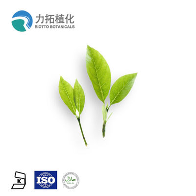 China Green Tea Polyphenol Organic Plant Powder EGCG , L - Theanine Yellow Brown factory