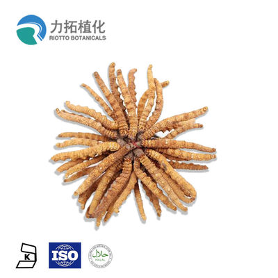 China 30% - 50% Mushroom Polysaccharides Cordyceps Sinensis Extract With Brown Powder distributor