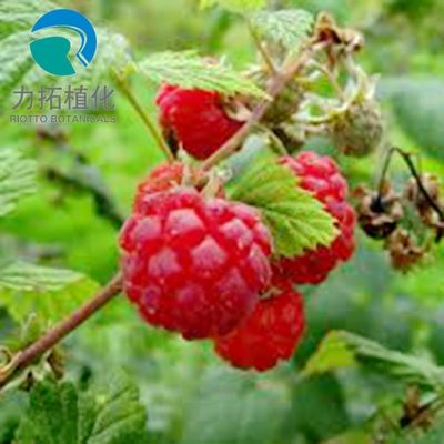 China Food Grade Freeze Dried Raspberry Powder 24 Months Shelf Life HPLC UV Method distributor